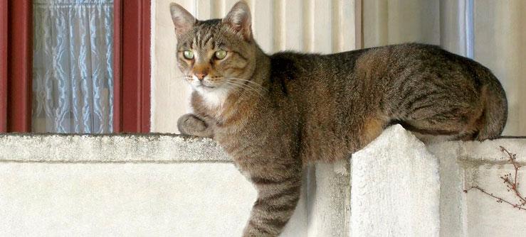 Coisas misteriosas que gatos fazem