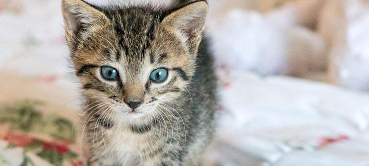 Ração para gatinhos crescerem fortes