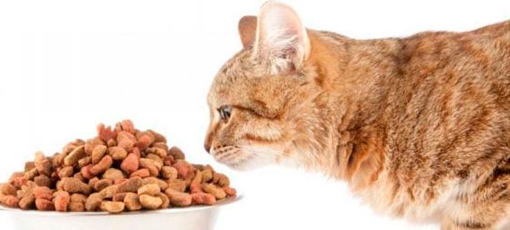 Entenda o exigente paladar dos gatos