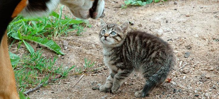 Dicas para adotar gatos