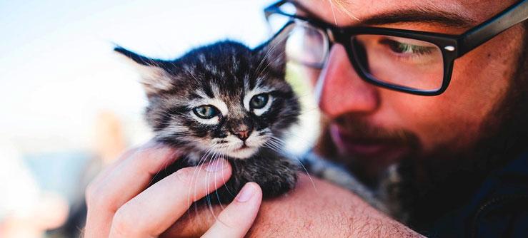 Dicas com gatos