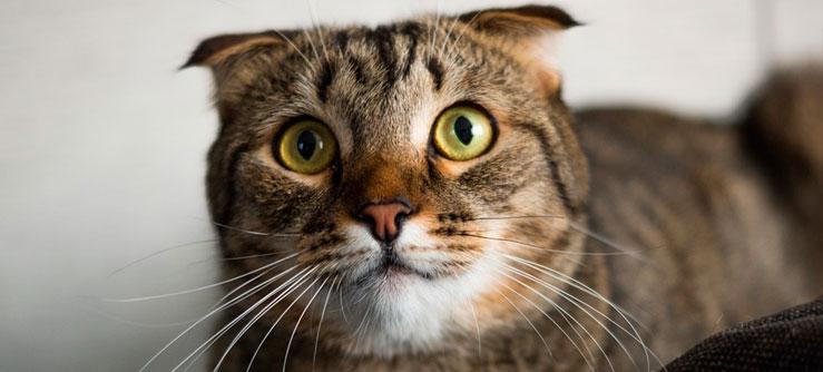 Problemas intestinais em gatos